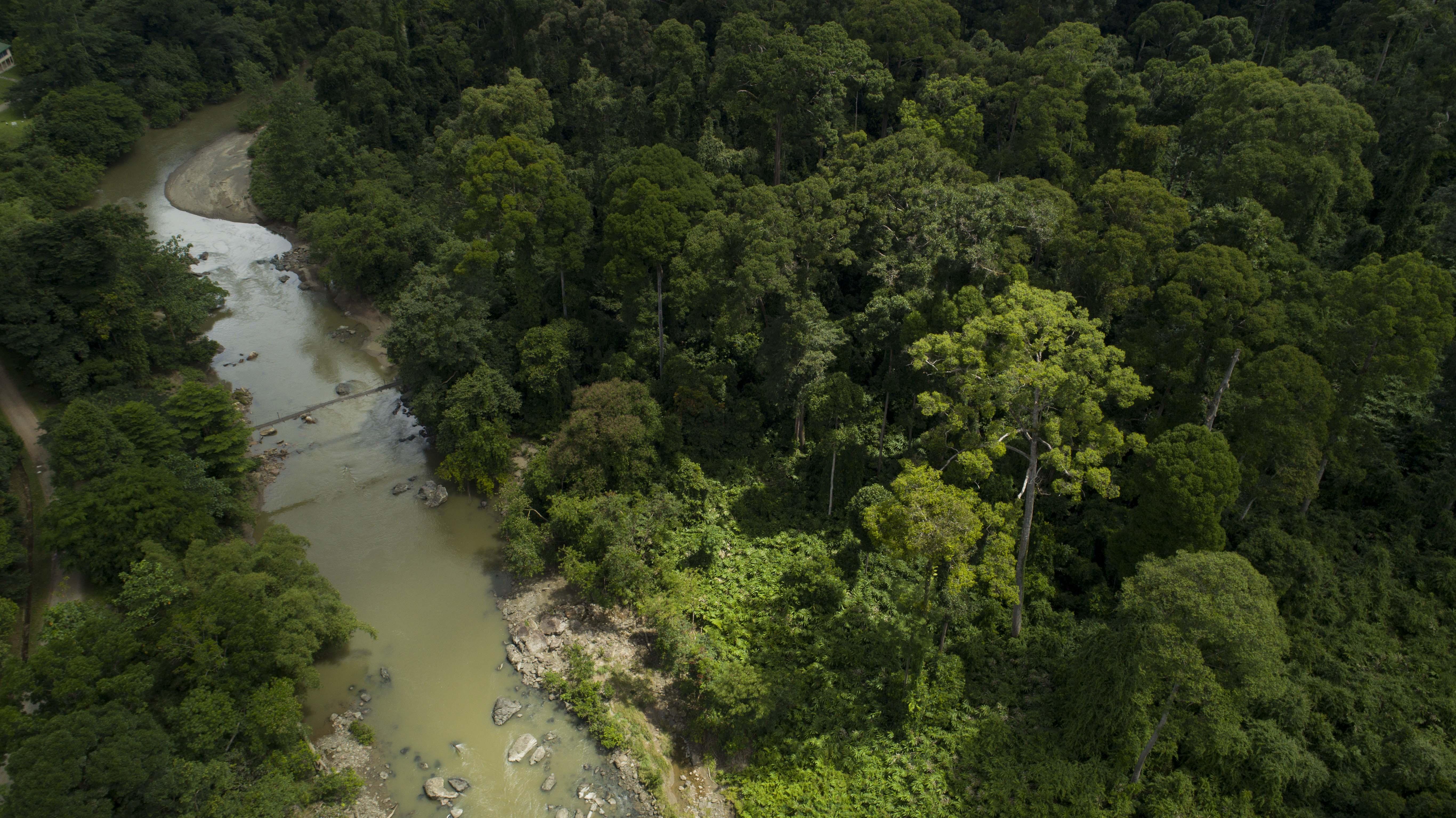 Danum Valley Ancient Rainforest Suspension Bridge