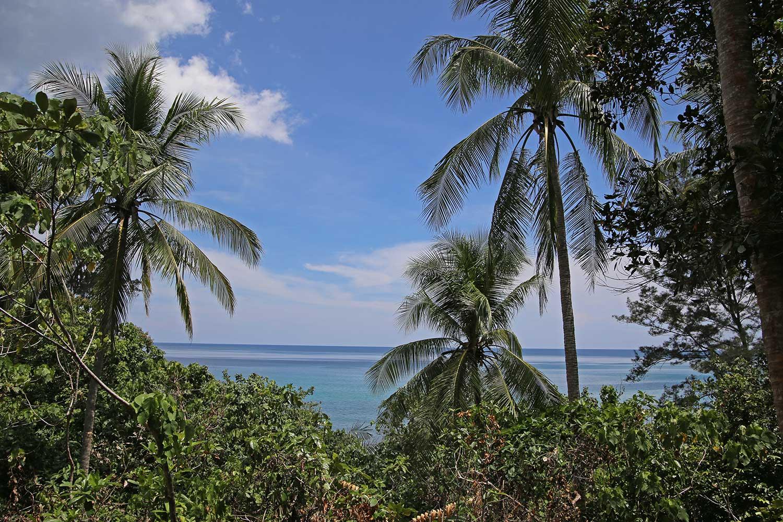 Hibiscus-beach-treetops-2
