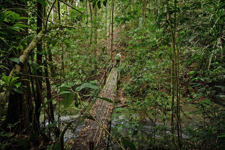 Trekking in Maliau Basin