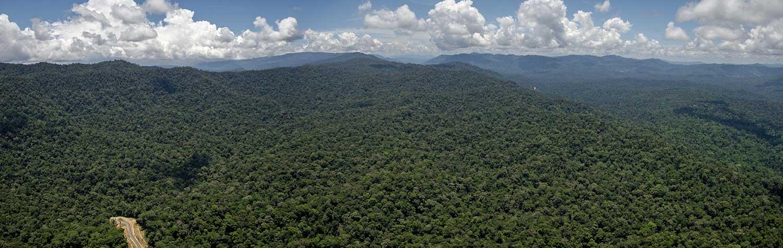 Maliau Basin Aerial Shot