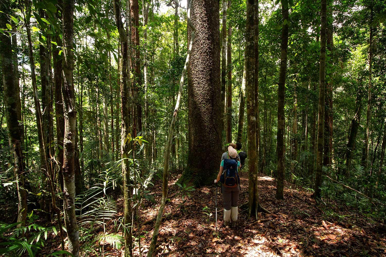 Maliau Basin Trekking