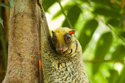 5 Under-rated Wildlife Encounters in Danum Valley