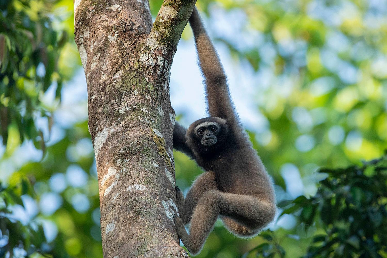 5 Under-rated Wildlife Encounters in Danum Valley