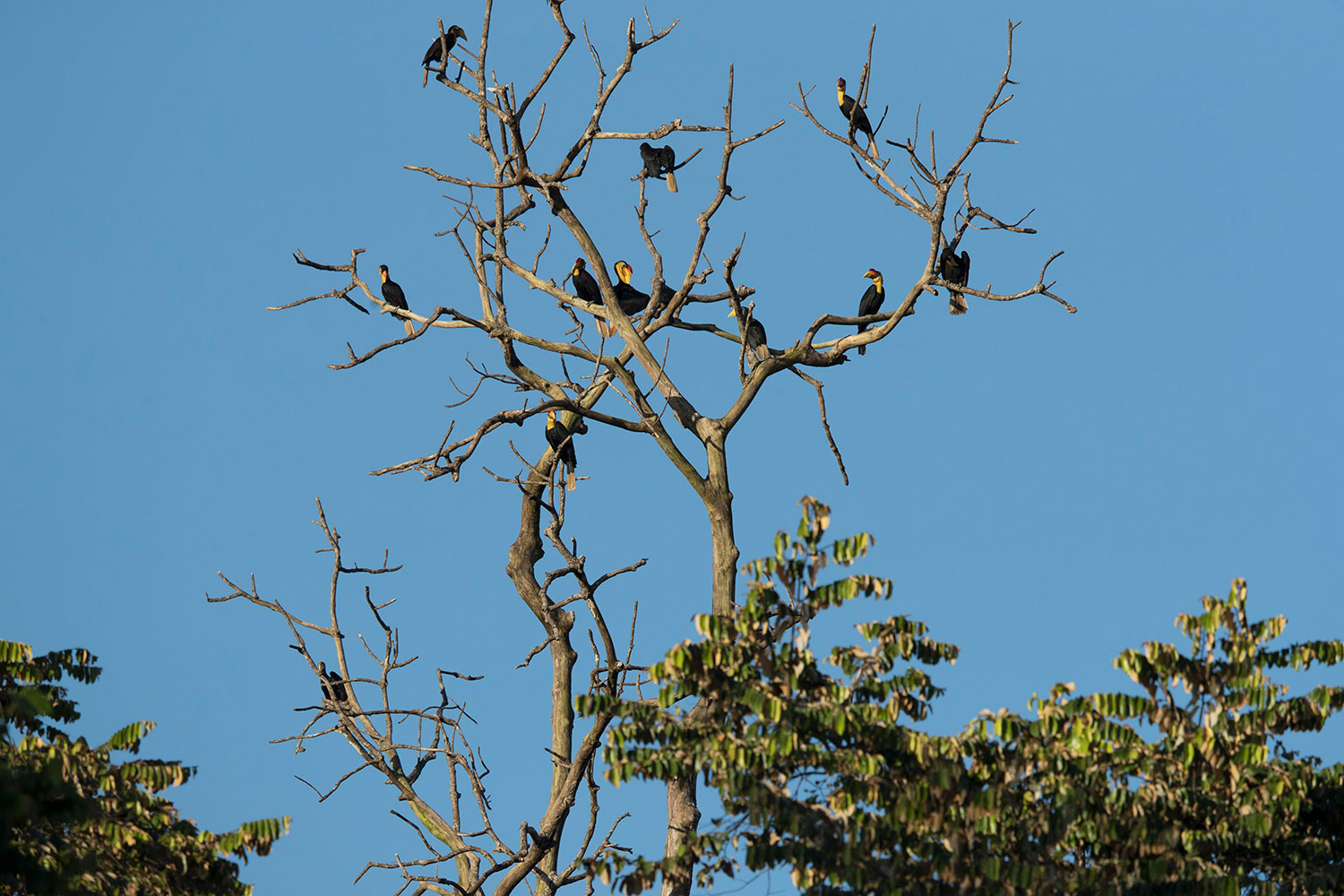 Where all the Birds Flock to in Sabah