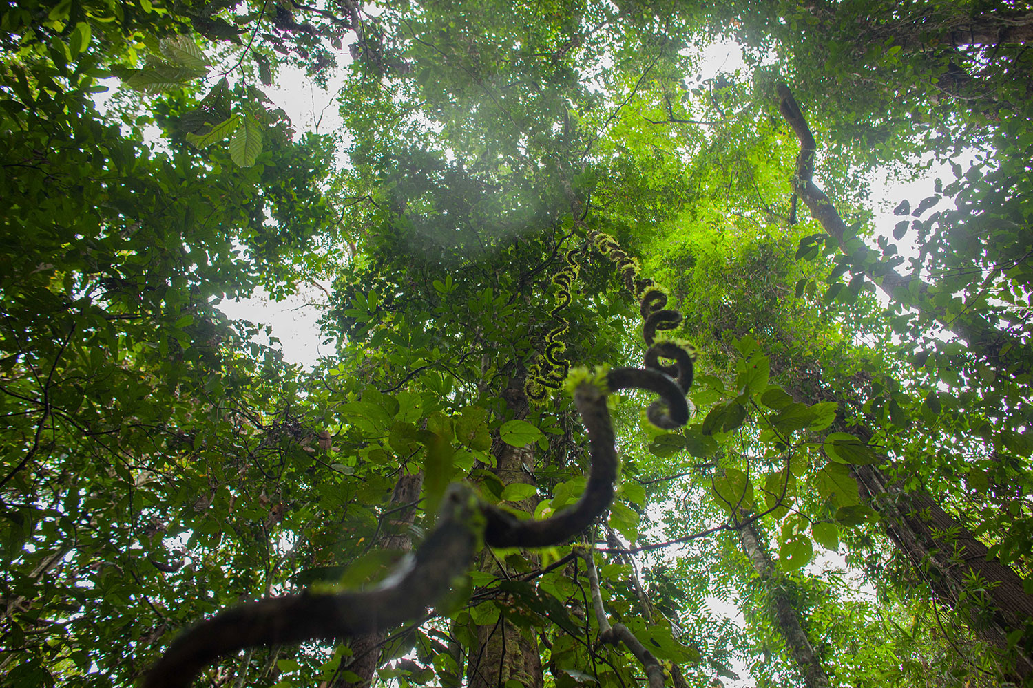Camping in an Ancient Rainforest at Danum Valley