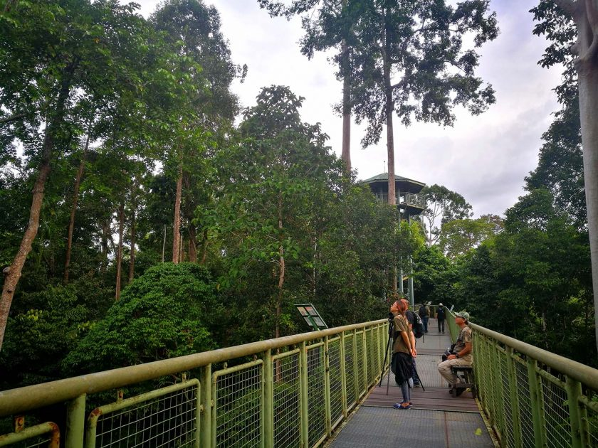The canopy walk at RDC