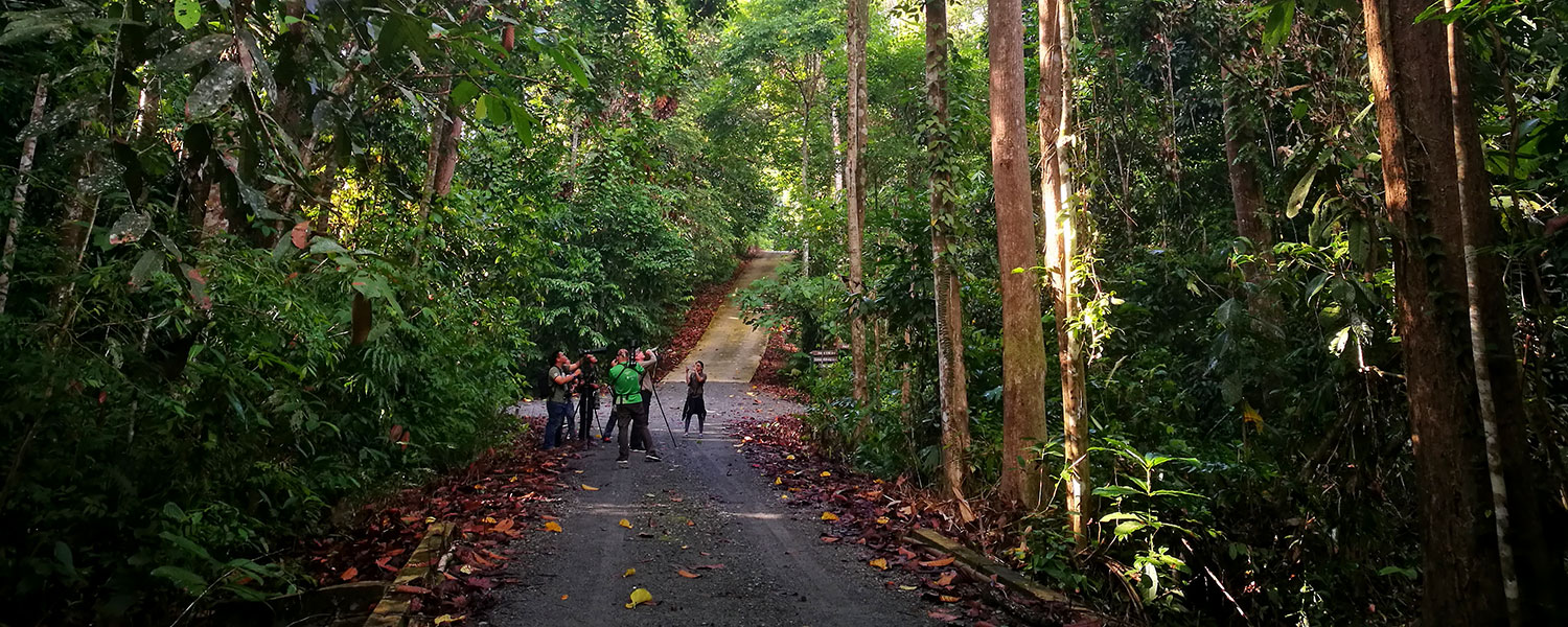 Into the rainforest to spot feathered beauties in RDC