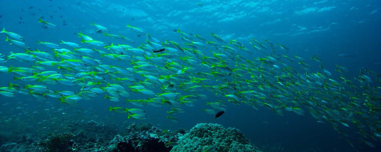 diving-snorkelling-1500-1